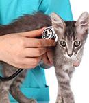 10 بیماری شایع در گربه ها
