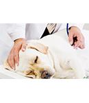 بیماری های عمومی سگ و گربه