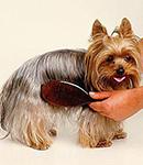 علت و دلایل ریزش موی سگ و راه جلوگیری از ریزش موی سگ