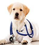 واکسیناسیون حیوانات خانگی
