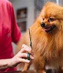 ریزش مو در حیوانات خانگی