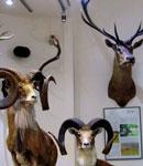 موزه حیات وحش دارآباد تهران