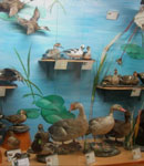 موزه حیات وحش هفت چنار تهران