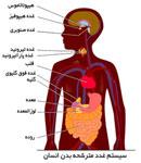 غدد و هورمون، چه اثری در زندگی دارند؟