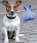 نکاتی درباره حیوانات خانگی که باید بدانید