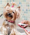 روش های مراقبت از دهان و دندان های حیوانات خانگی
